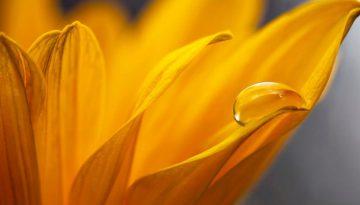 4-grunde-til-du-og-din-virksomhed-har-gavn-af-mindfulness