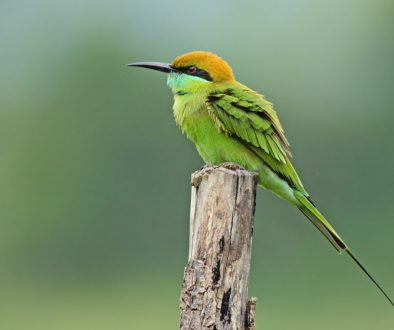 500px Photo ID: 95468691 - Bee Eater